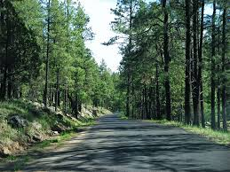 New Mexico forest images Nm 15 through the forest gila cliff dwellings national monument jpg