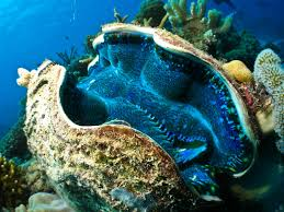 great barrier reef animals great barrier reef liveaboards