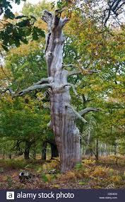 sherwood forest stock photos u0026 sherwood forest stock images alamy