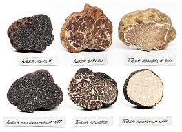 where can you buy truffles truffles at london foods fresh truffle