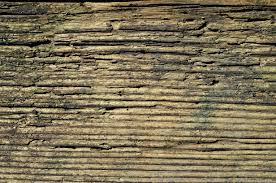 Wood Floor Paneling Free Images Tree Nature Forest Rock Board Floor Old Clear