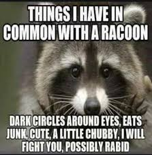Common Memes - dopl3r com memes things i have in common with a racoon dark