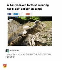 Tortoise Meme - 25 best memes about tortoise tortoise memes