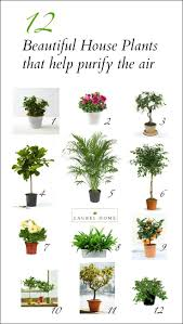 beautiful house plants the best and most beautiful house plants for cleaner air plants