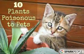 10 common house plants that are poisonous to pets sparkpeople