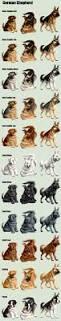 belgian shepherd ontario breeders 319 best dog breeds images on pinterest