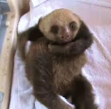 Angry Sloth Meme - mad baby gif