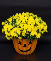 halloween flowers halloween archives currans flowers