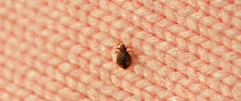 Treatment For Bed Bugs Bed Bug Treatment Terminix Pest Control