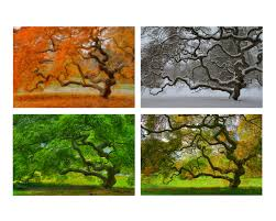 sale 6x9 print set seasons landscape photography tree