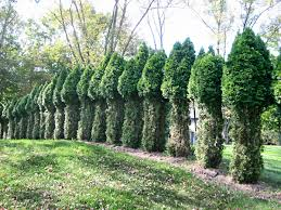 plants native to new jersey new jersey deer and your landscaping perfect together