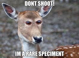 Deer Meme - derpy deer imgflip