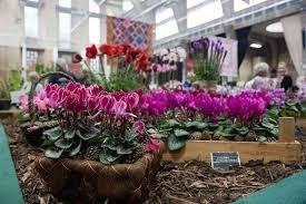 plan your visit to rhs london shows rhs gardening