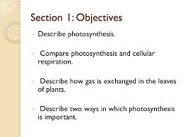 chapter 13 plant processes ppt video online download