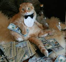 Rich Cat Meme - rich cats rolling in cash cash cats pinterest cat scottish