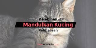 hukum memandulkan kucing 5 kelebihan mandulkan kucing peliharaan