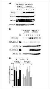 the p38 kinases mkk4 and mkk6 suppress metastatic colonization in