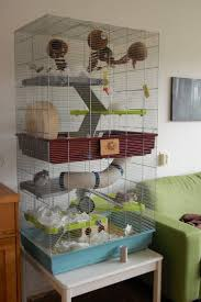 Best Bedding For Rats Best 25 Rat Cage Ideas On Pinterest Rat Cage Diy Ferret Cage