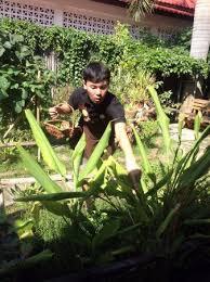 cours de cuisine chiang mai cueillette au jardin de l école de cuisine picture of