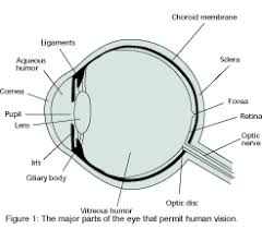 Behind The Ear Anatomy The Eye The Ear And The Brain Sound U0026 Video Contractor
