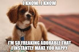 Funny Puppy Memes - 10 funny puppy memes what every dog deserves