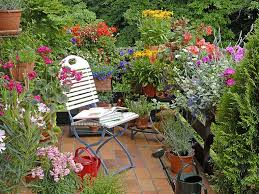 gardening ideas for balconies patios u0026 courtyards saga