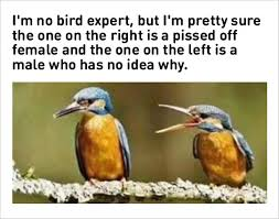 Funny Bird Memes - 10 marriage memes 1 a divorcing couple splits beanie babies in court