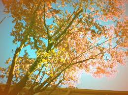 dreaming tree vintage home
