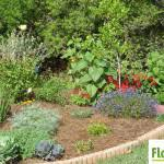 florida friendly landscaping wholylocal