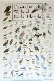 235 best florida living images on pinterest sunshine state