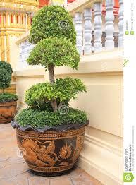 plants awesome fancy plant pots diy aged french garden fancy