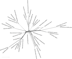 nuclear genomic signals of the u0027microturbellarian u0027 roots of