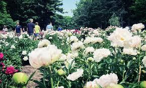 Michigan Botanical Gardens Botanical Garden Membership The Of Michigan Matthaei