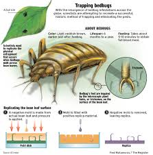 How To Get Rid Of Bed Bugs At Home Home Remedies For Bed Bugs U2013 How To Get Rid Of Bed Bugs Fast