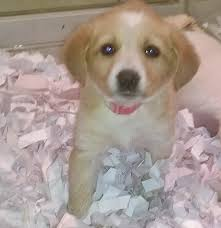 queens puppies for sale queens puppy experts queens dogs for