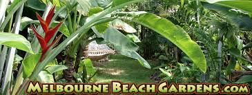 Tropical Plants For Garden - tropical plants and fresh cut tropical flowers for sale