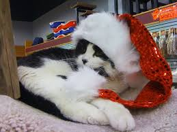 sweet christmas gifts wallpapers 28 best christmas cats wallpapers images on pinterest cat