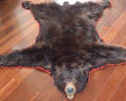 perfect the bear skin rug is fashionable u2014 the wooden houses