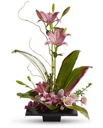 cymbidium orchids imagination blooms with cymbidium orchids flowers imagination