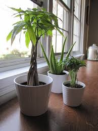 plants for living room home decorating inspiration