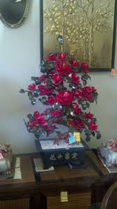 Barcana Christmas Trees by 67 Best Jade Trees Images On Pinterest Jade Chinese And Bonsai
