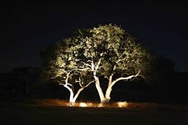 Landscape Lighting Trees Company Designing Landscape Lighting For Trees With Leds Landscape