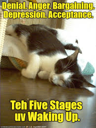 Depressed Cat Meme - lolcats depression lol at funny cat memes funny cat pictures