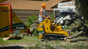 from those who pella tree service vermeer tree care