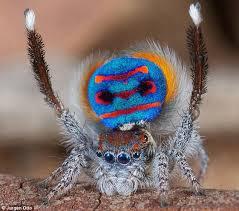 secret incredible u0027rainbow spider u0027 revealed daily