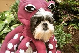 Ewok Dog Halloween Costume 8 Ridiculous Dog Halloween Costumes Buy