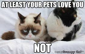 Best Grumpy Cat Memes - 21 of the best grumpy cat memes myfunnypalace