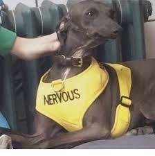 Nervous Meme - nervous dog irl meme on me me