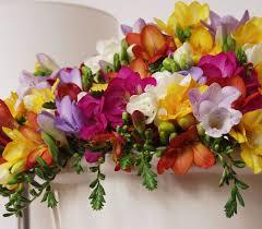 freesia flower freesias flowers world flowers