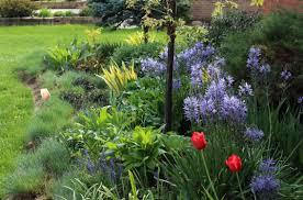 tennessee smart yards native plants tulips sorta like suburbia